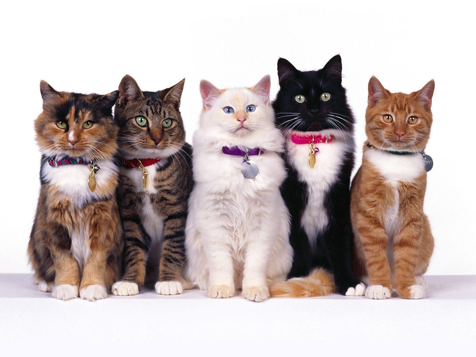 Vrai ou faux ? : les chats