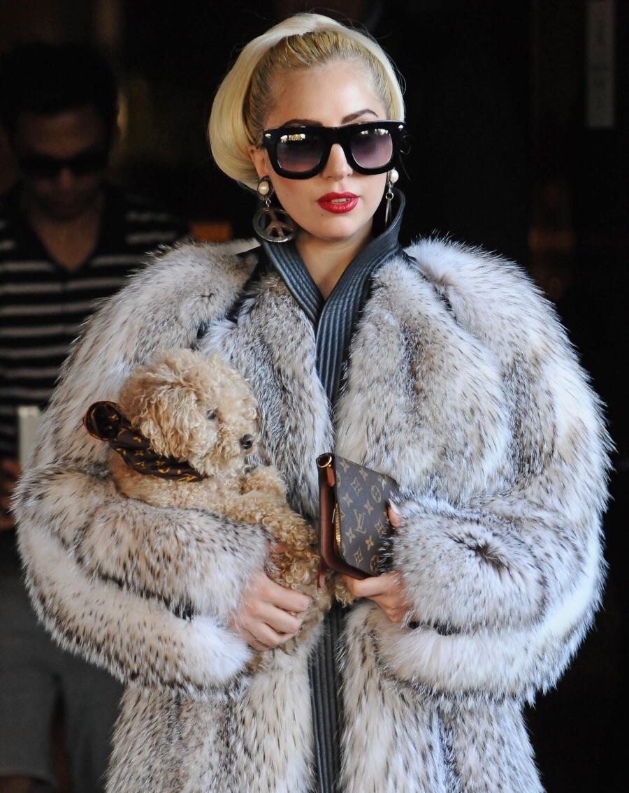 La vie de Lady Gaga avant la célébrité