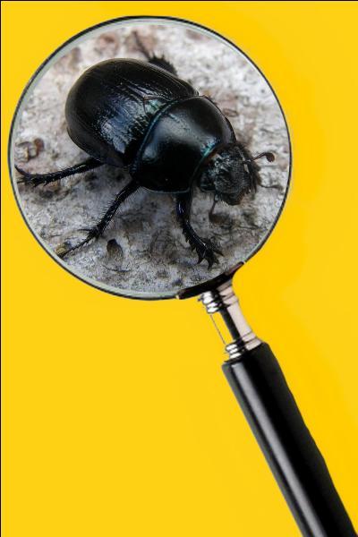 Il fait des boules avec des morceaux d'excréments et les roule jusque dans son trou et il les enterre. Quel est le nom de cet insecte ?