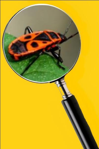 Ils sont des insectes utiles, car ils mangent plusieurs insectes plus indésirables comme les pucerons. Quel est le nom de cet insecte ?