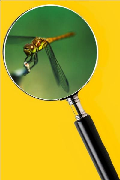 Elle vit le jour au bord des étangs et des rivières. Son vol est silencieux et très rapide. Quel est le nom de cet insecte ?