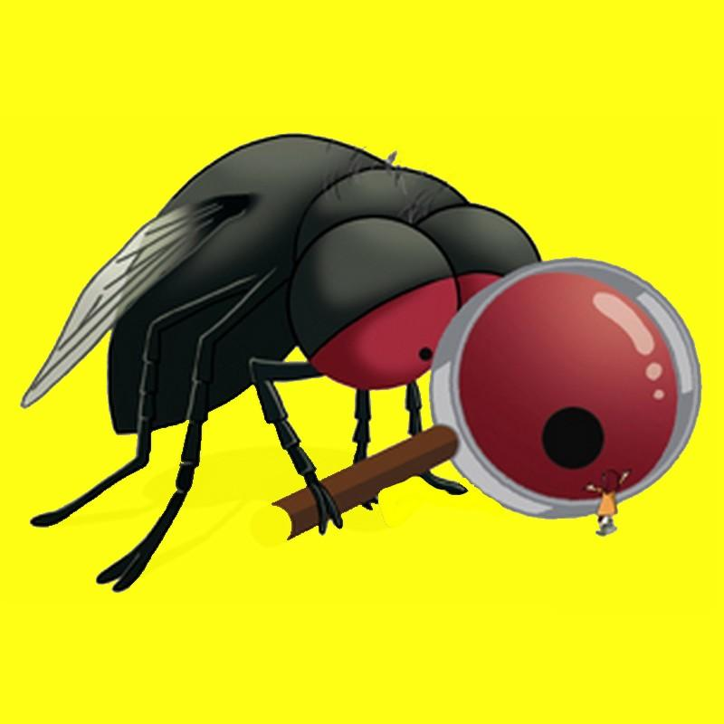 Les insectes à la loupe