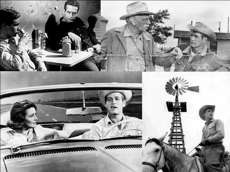 C'est un western américain de 1963, il a été réalisé par Martin Ritt.Paul Newman, Melvyn Douglas, Patricia Neal… font partie de la distribution. Un jeune mène une vie dissolue, au contraire des valeurs de son père. En plus, une épidémie ravage leur troupeau. Le père doit agir pour remettre dans le droit chemin son fils ! Quel est ce film ?