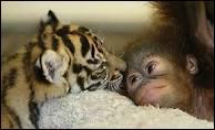 On n'a pas deux coeurs, un pour les animaux et un pour les humains. On a un coeur ou on n'en a pas ! De qui est cette citation ?