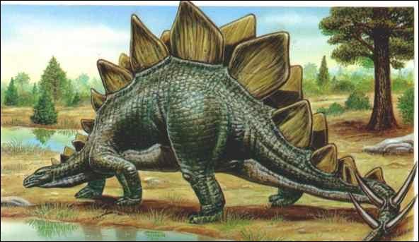 Quel est ce dinosaure qui possède de grandes plaques osseuses le long de son dos et de sa queue ?