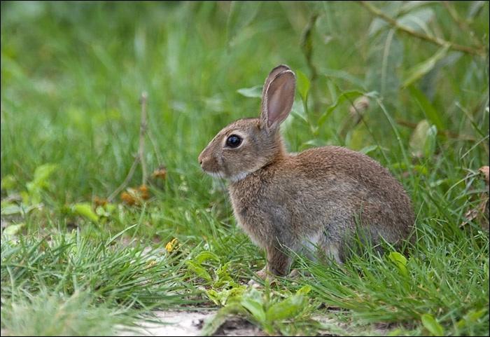 Ce que vous voyez sur cette photo est un lapin.