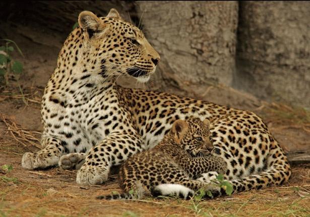 Ces animaux que l'on confond (2)