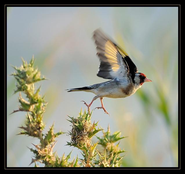 Quel oiseau s'envole sur cette image ?