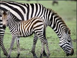 Quizz la gestation chez les animaux quiz animaux gestation - Combien de temps dure les coups de soleil ...