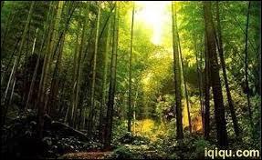 Dans quel pays se trouve la forêt de bambou de Hei Zhu Gou ?