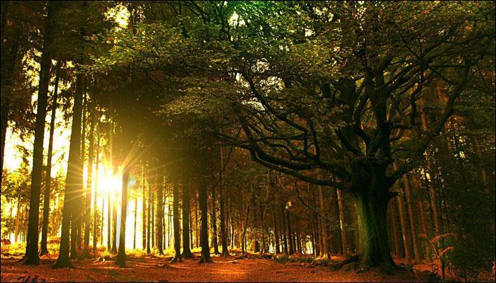 Quand on évoque cette forêt française, on pense tout de suite au druide Merlin. Comment s'appelle cette forêt ?