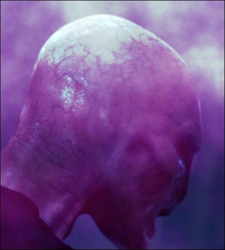 _______________ Chapitre 2 : Le nouveau look Voldemort _______________« Les yeux écarlates et grands ouverts, le nez plat, avec deux fentes en guise de narines, à la manière ___A___… Il contempla ses mains, semblables à ___B___ , puis caressa de ses longs doigts blanchâtres sa poitrine, ses bras, son visage. Ses yeux rouges, aux pupilles verticales comme celles ___C___ . »
