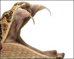 Diable comme les animaux ont des vertus nombreuses ! Je vous propose un bouillon pétillant pour prolonger l'existence. Avec quoi est-il concocté ?