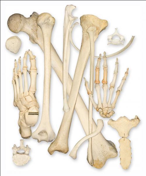 """Son surnom est """"Bones"""", pourquoi ?"""