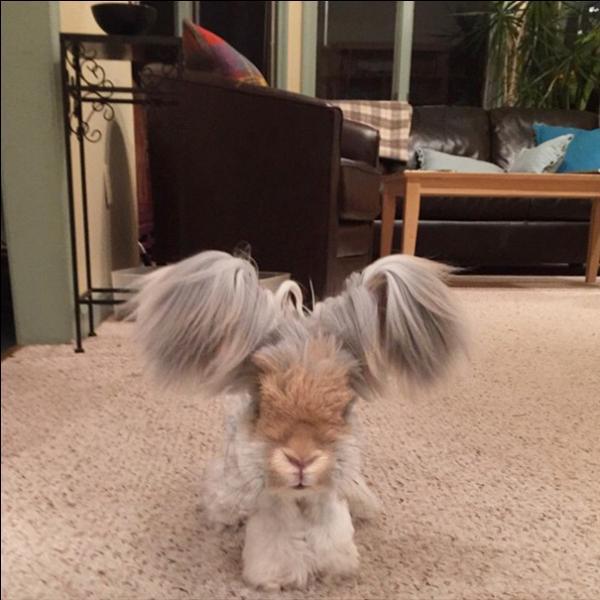 Sur cette photo, tu peux voir un lapin !