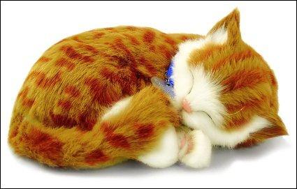 Pour terminer ce quiz, je te propose de caresser ce chat, c'est un vrai chat, il est sympa non ?