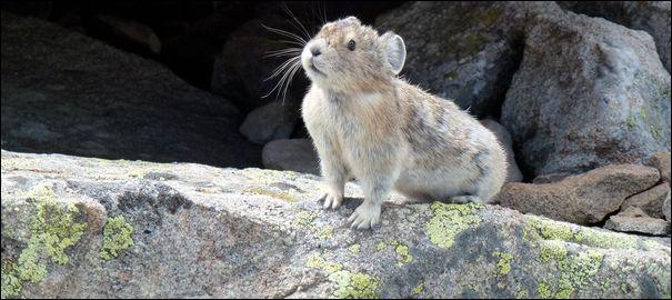 On dirait un véritable petit animal, c'est normal puisque c'en est un !