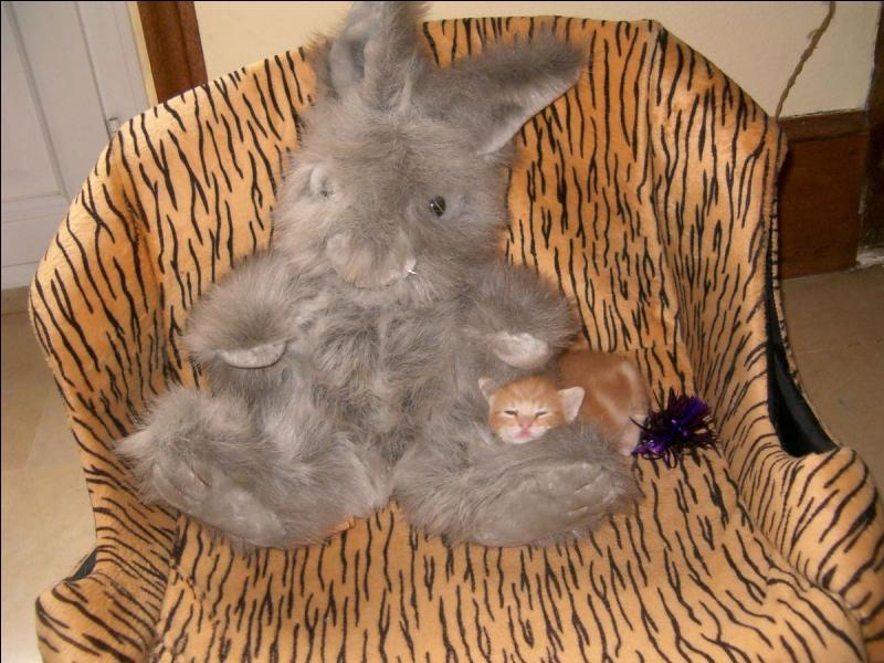 Sur cette photo, on peut voir une peluche et un chaton !