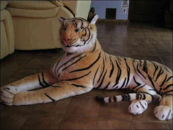 Comme tu peux le voir, ce tigre est apprivoisé !