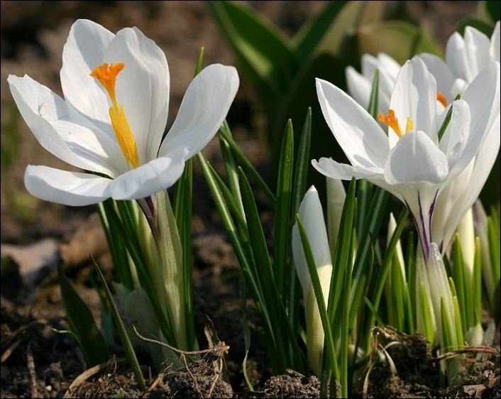 Quelle est cette jolie petite fleur élégante et de fière allure ?