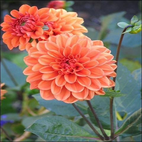 Ce sont pour moi les plus belles de l'automne. Comment s'appellent-elles ?