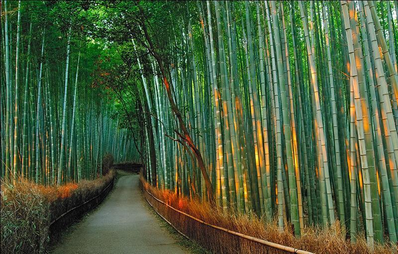 Que plante-t-on dans une bambouseraie ?