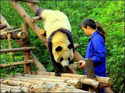 Il est important d'élever cet animal en zoo pour assurer sa survie.