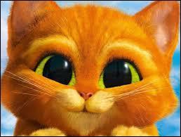 Qui est ce chat à qui on ne peut résister ?