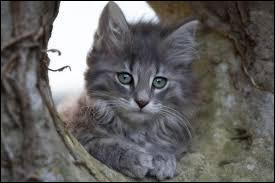 Le chat est un animal domestique. C'est aussi le nom que l'on donne à...