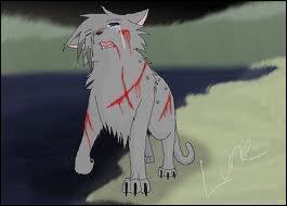 Sa sœur, ou son frère, est obsédé par le Code du Guerrier mais commet une faute grave en assassinant un chat gris. Qui est-ce ?