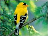 """Qui a dit : """"L'âme est le seul oiseau qui soutienne sa cage."""" ?"""