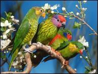 """Qui a dit : """"En amour, il arrive quelquefois que l'oiseau prend l'oiseleur."""" ?"""