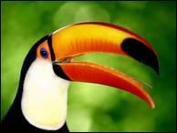 """Qui a dit : """"Un seul oiseau en cage la liberté est en deuil."""" ?"""