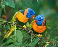 """Qui a dit : """"Au plus fort de l'orage, il y a toujours un oiseau pour nous rassurer. C'est l'oiseau inconnu, il chante avant de s'envoler."""" ?"""