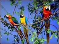 """Qui a dit : """"L'oiseau englué dans un buisson se méfie de tous les buissons."""" ?"""