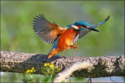 """Qui a dit : """"L'oiseau s'est libéré de la terre. Désormais il sera prisonnier du ciel."""" ?"""