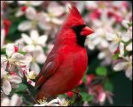 """Qui a dit : """"La chance est un oiseau de proie survolant un aveugle aux yeux bandés."""" ?"""