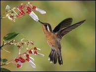 """Qui a dit : """"Il faut être léger comme l'oiseau et non comme la plume."""""""