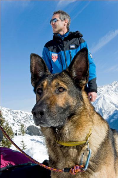 Quelle est la race de ce chien d'avalanche qui accompagne un CRS pour porter secours ?