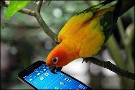 On ne dit plus ''perroquet'' mais...