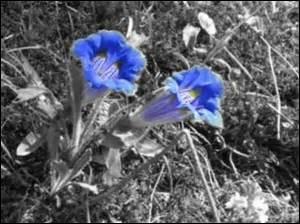Quel est le nom de ces fleurs sauvages ?
