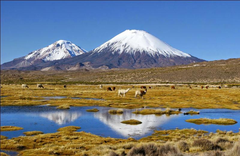 Ce pays, parcouru du nord au sud par la cordillère des Andes, présente une incroyable diversité de paysages du haut-plateau désertique de l'Atacama au Nord aux glaciers de Patagonie au Sud et jusqu'au cap Horn. Bienvenue :