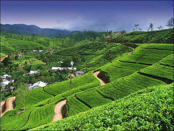Cet état insulaire du sous-continent indien offre de superbes paysages de rizières à flanc de montagne, ainsi qu'un important patrimoine culturel, notamment d'impressionnants temples bouddhistes. Vous aurez reconnu :