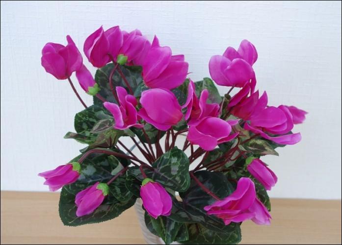 Que sont ces fleurs aux couleurs éclatantes qui décoreront agréablement votre salon ?