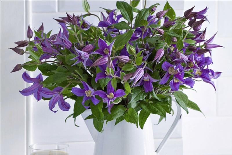 Un bouquet charmant pour enjoliver les jours tristes :