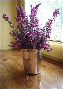 Voici des fleurs de saison qui orneront joliment votre intérieur :