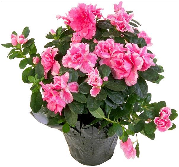 Voilà encore de quoi égayer l'hiver avec ce somptueux bouquet :