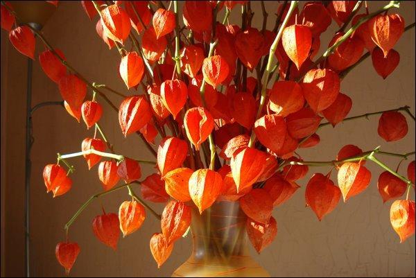 Et pourquoi ne pas utiliser des fleurs séchées et décoratives aux teintes lumineuses ?
