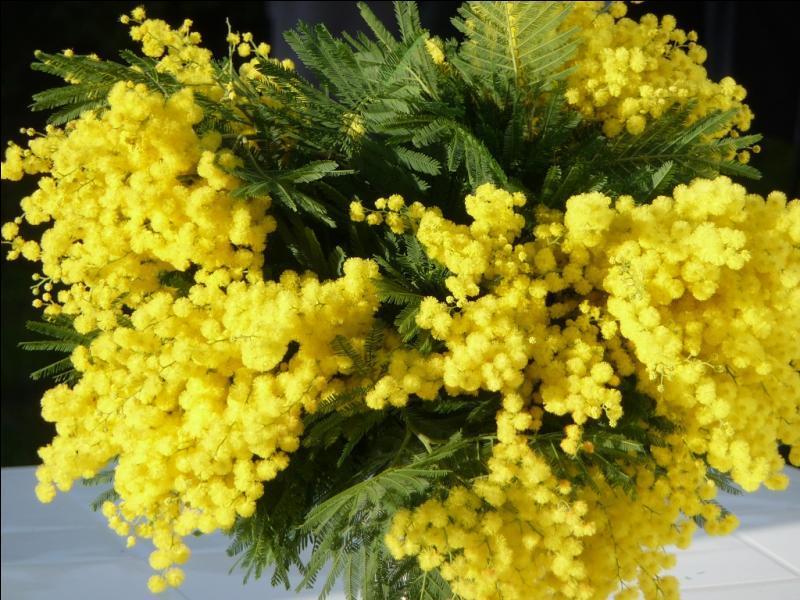 Des fleurs pour égayer l'hiver !