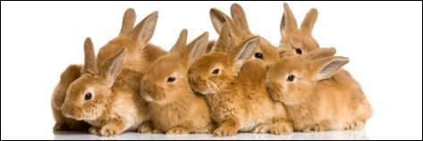 Sur laquelle de ces marques ne pouvez-vous pas voir un lapin comme mascotte ?
